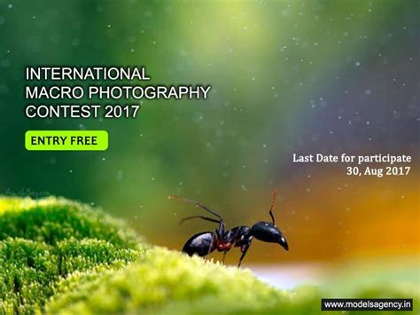 international macro photography contest  photo