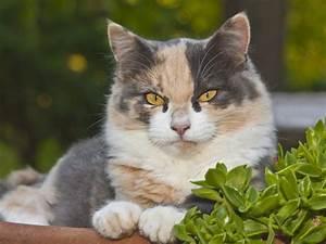 Verkleidung Für Katzen : ungiftige balkonpflanzen f r katzen kaufen ~ Frokenaadalensverden.com Haus und Dekorationen