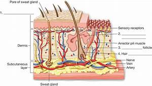 Anatomy of the skin. Illustration of a section of skin ...
