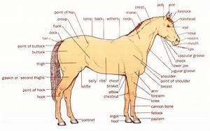 Equestrian Basics