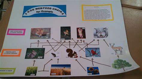 food web project food webs projects food web