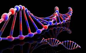 Fit To Live  Genotype