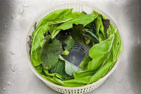 grouper cheeks recipe stew choy chard kale collards bok picked backyard mix garden