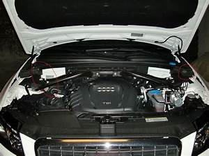 Mouse In Engine Bay