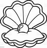 Pearl Seashell Scallop Shell Animal Bead sketch template