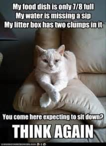 cat work funniest cat memes uk cat breeders