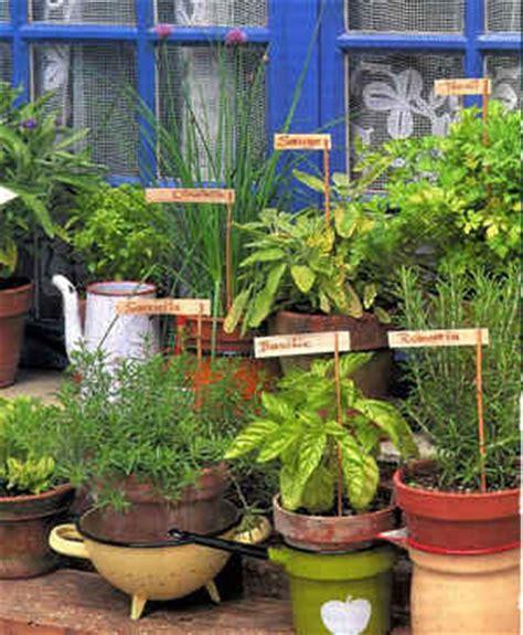 les plantes aromatiques au potager
