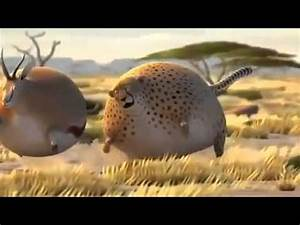 The fatest animals of the World - YouTube