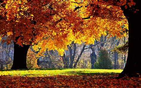Autumn Windows Xp Wallpapers by Blurred Autumn Beautiful Photography Wallpaper 6