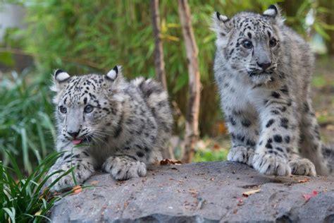 zoos adventure travel worlds