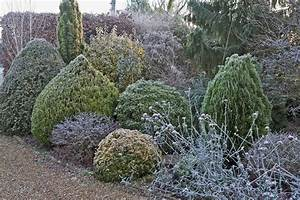 Use Dwarf Evergreens To Give Your Garden Structure