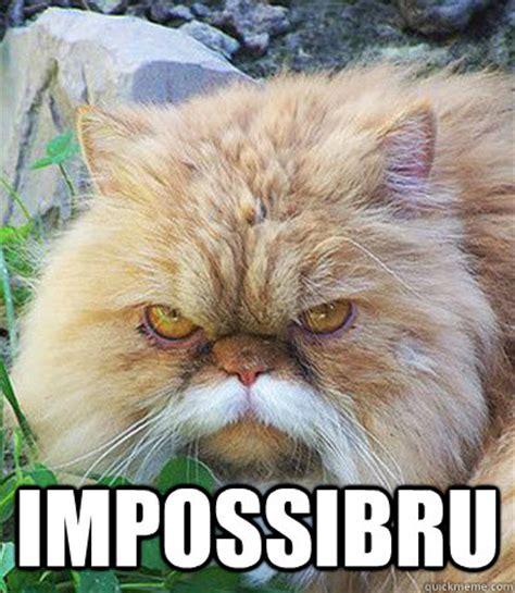 Diabeetus Cat Meme - impossibru diabeetus cat quickmeme