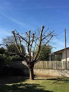 Taille De Cerisier : elagage d 39 un cerisier ~ Melissatoandfro.com Idées de Décoration