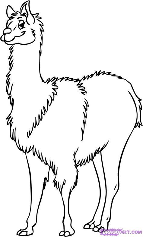 draw  cartoon llama step  step farm animals