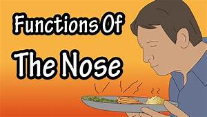 The Nose - Functions Of The Nose - How The Nose Works