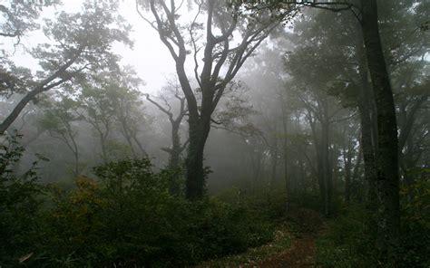 foggy forest wallpapers hd pixelstalknet