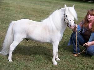 American Miniature Horse Association Amha | adanih.com