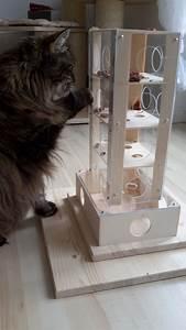 Katzenspielzeug Selber Machen Karton : die besten 25 katzenspielzeug ideen auf pinterest selbermachen katzen spielzeug k tzchen ~ Frokenaadalensverden.com Haus und Dekorationen