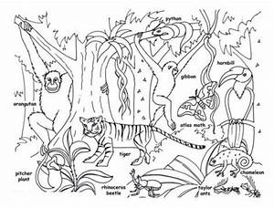 Tropical Jungle And Rainforest Animals Coloring Page Kids ...