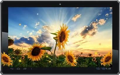 Desktop Interactive Weather Sunflower Sunset Active Google