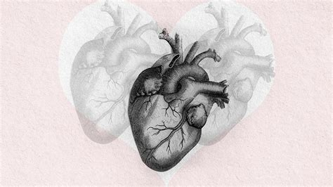 Scientists Grow A Human Heart From Stem Cells
