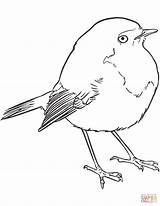 Coloring Goldcrest Pages Goldfinch American Clip Printable Drawing Print Birds sketch template