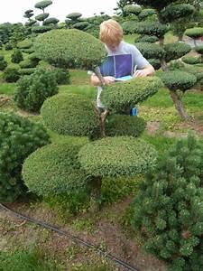 gartenbonsai fragen bilder pflanz und With feuerstelle garten mit bonsai eibe