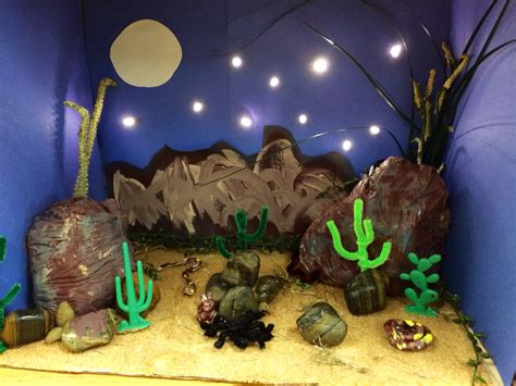 Desert Biome Diorama Science Project Science