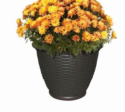 Plants Garden Container Seasonally Change Southern Maintaining