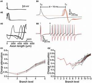 Signal Propagation Throughout The Axonal Tree Of The