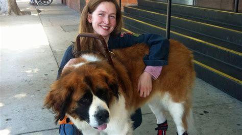 legged impostors give service dog owners pause npr