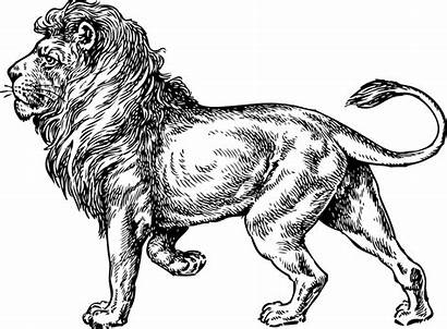Lion Coloring Pages Drawing Realistic Clip Sketch