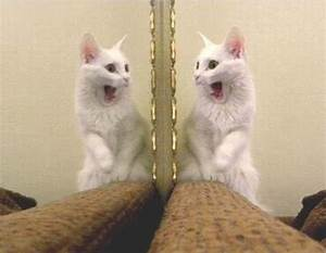 List of Animals That Have Passed the Mirror Test - Animal ...