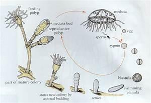 Fascinating Jellyfish