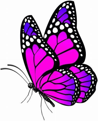 Butterfly Transparent Butterflies Clip Pngio