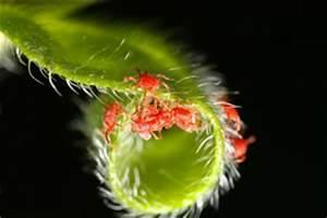 Spinnen Fernhalten Wohnung : kleine rote spinnen in wohnung garten bek mpfen ~ Whattoseeinmadrid.com Haus und Dekorationen