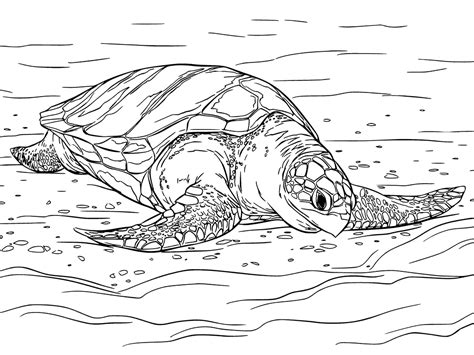 sea turtle coloring pages getcoloringpagescom