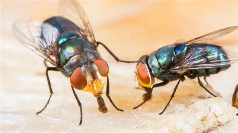 badezimmer amazon lästige fliegen wirksam vertreiben und bekämpfen