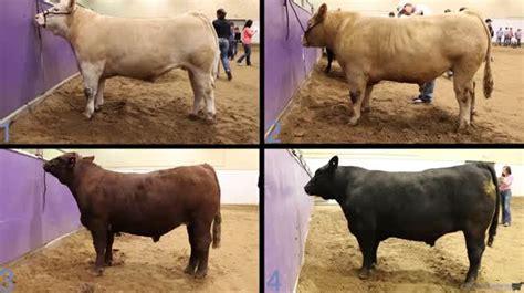 tarleton pre state workout livestockjudgingcom