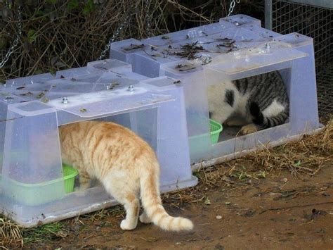 Outdoor Cat House Outdoor Cat House For Strays