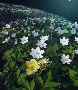 Jardiner Avec La Lune : faut il jardiner avec la lune neo bien tre ~ Farleysfitness.com Idées de Décoration