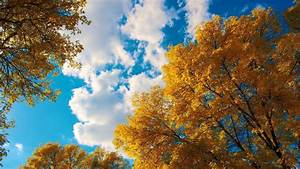 Beautiful, Sky, And, Autumn, Trees