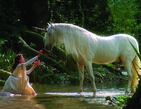 unicorns horse unicorn sort