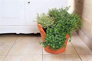 Kräuterspirale Für Balkon : kr uterspirale im topf ~ Michelbontemps.com Haus und Dekorationen