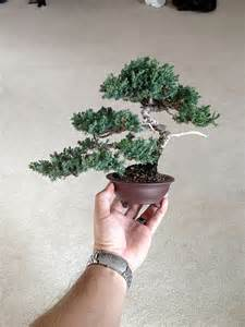 juniper bonsai tree styles wallpaper