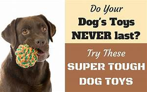 25 best ideas about durable dog toys on pinterest diy With best dog toys for tough chewers