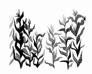 cornfield coloring page - Google Search | centennial ref ...
