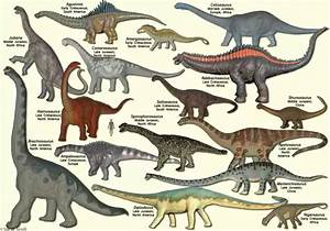 Did all dinosaurs become extinct or did some evolve into ...