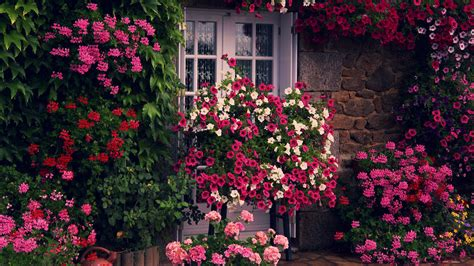 house  flowers wallpaper