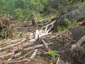 Deforestation and afforestation essay